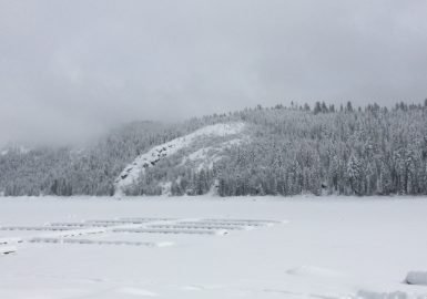 Pinecrest Winter