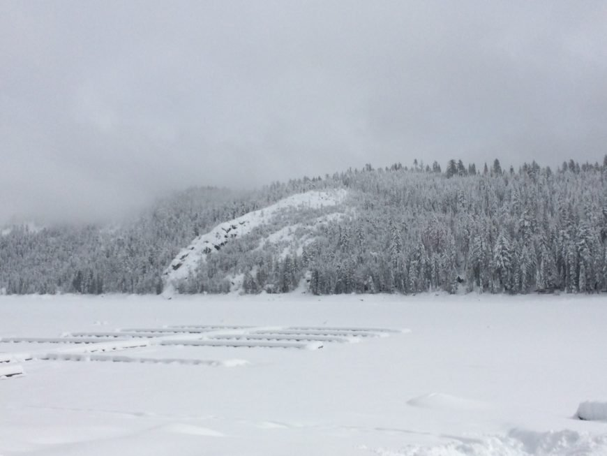 Pinecrest Winter
